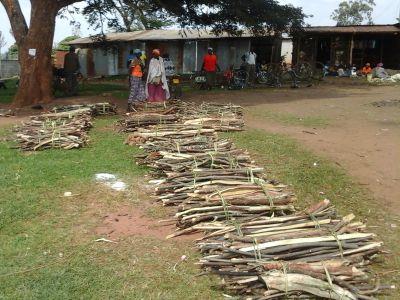firewood in Kenya
