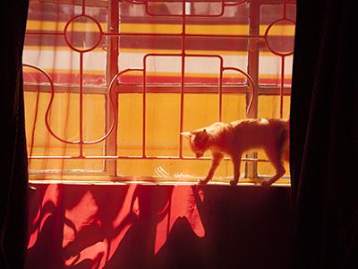 Kitten in Uganda