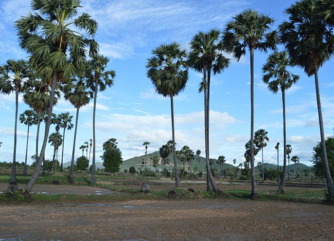 Kampong Speu Kinship - 3